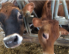 Iowa offers great benefit to dairy farmers